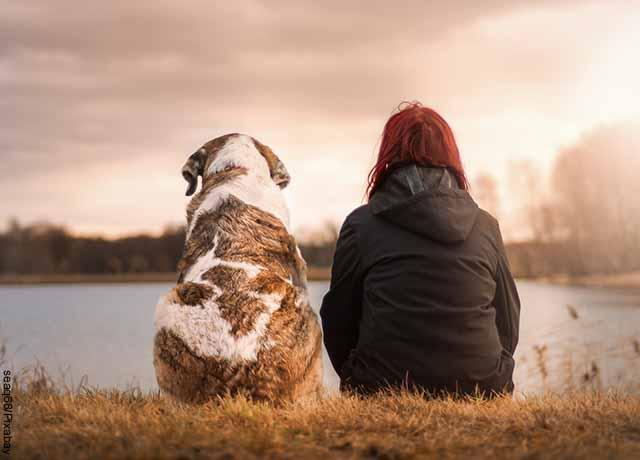 Perros detectan el covid-19 en el sudor humano, según un estudio
