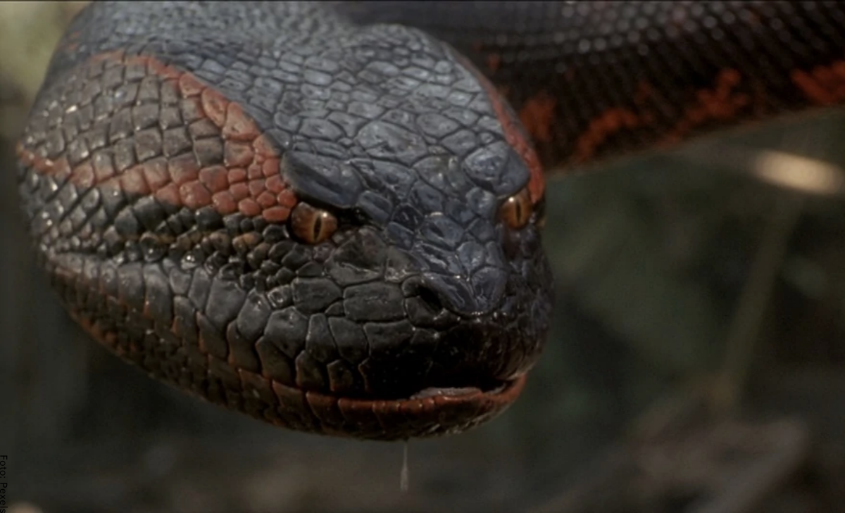 Qué significa soñar con anacondas, ¿fuerzas negativas?