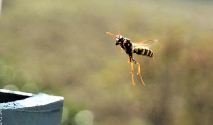 Foto de avispa volando