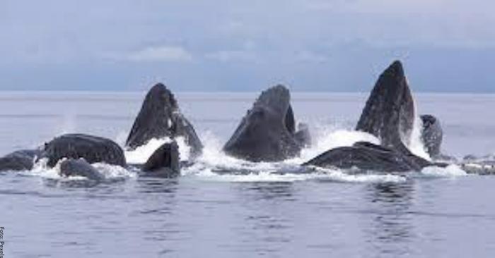 Foto de muchas ballenas