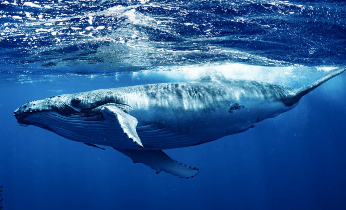Soñar con ballenas, ¿riqueza y estabilidad económica?