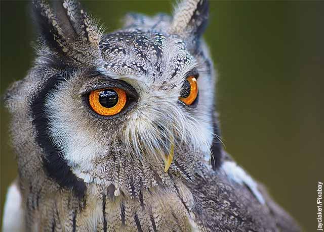 Foto del rostro de un ave gris