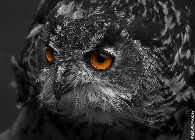 Foto de un búho gris que revela lo que es soñar con búho