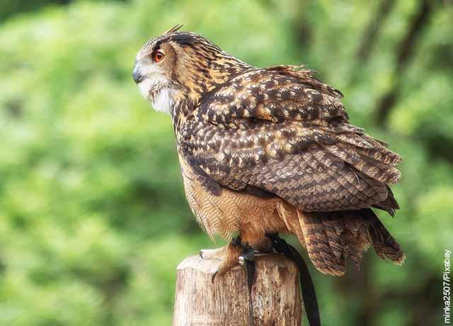 Foto de una pequeña ave sobre un tronco