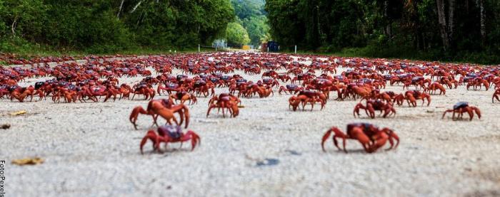 Foto de muchos cangrejos