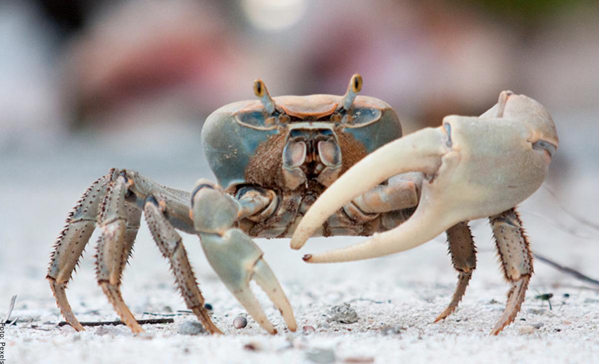 Soñar con cangrejos, ¡cosas buenas están por venir!