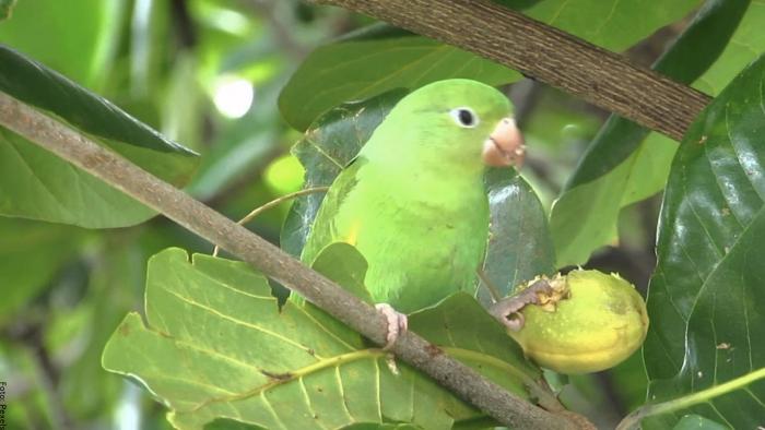 Foto de un loro verde