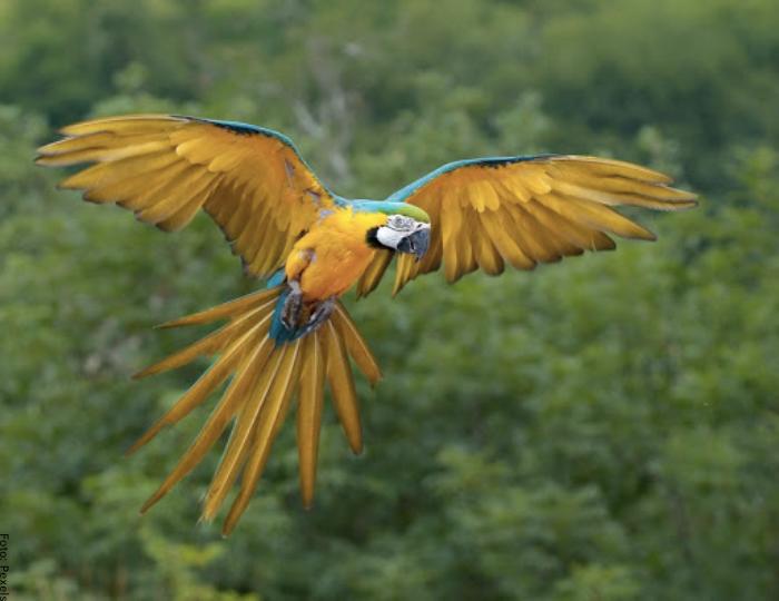 Foto de un loro volando