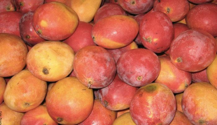 Foto de muchos mangos