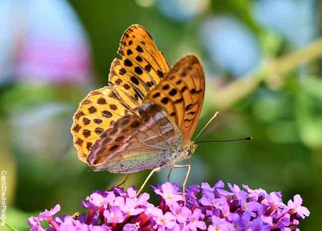 Foto de una mariposa amarilla