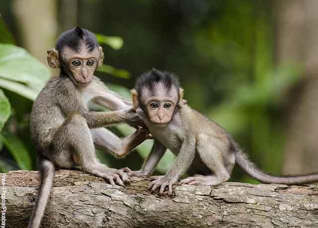 Foto de dos pequeños simios sobre una rama de un árbol