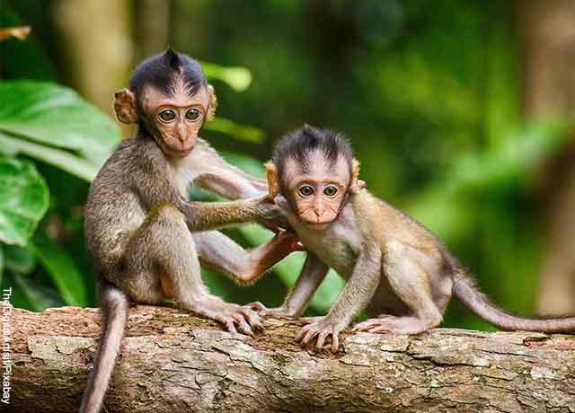 Foto de dos pequeños simios cafés sobre un árbol