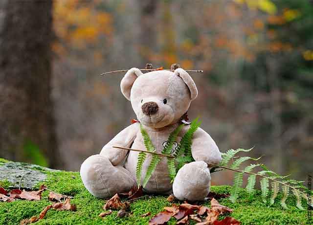 Foto de un oso de felpa