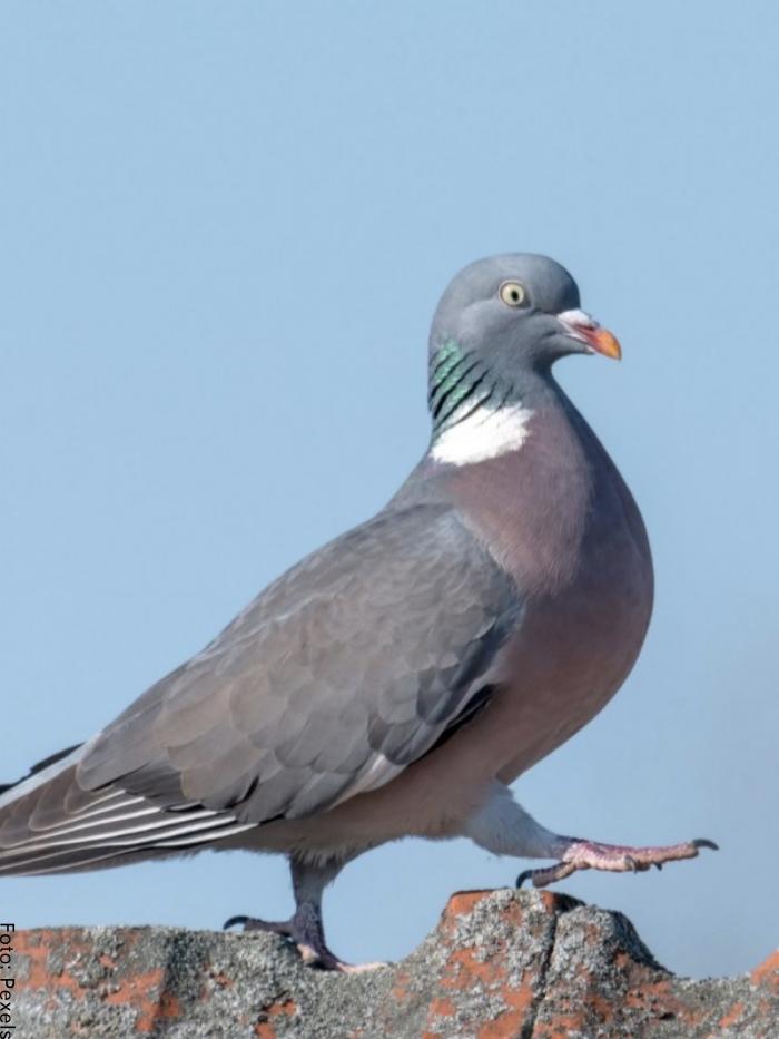 Foto de un ave