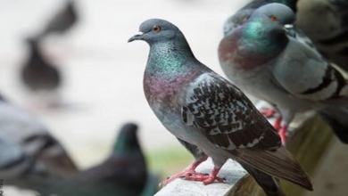 Soñar con palomas, ¡prepárate para lo bueno de la vida!