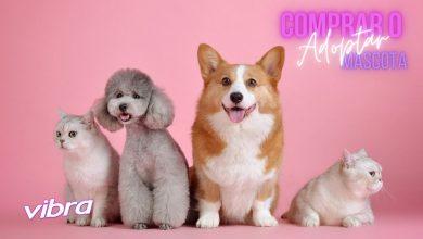 ¿Adoptar o comprar una mascota? Tremendo dilema