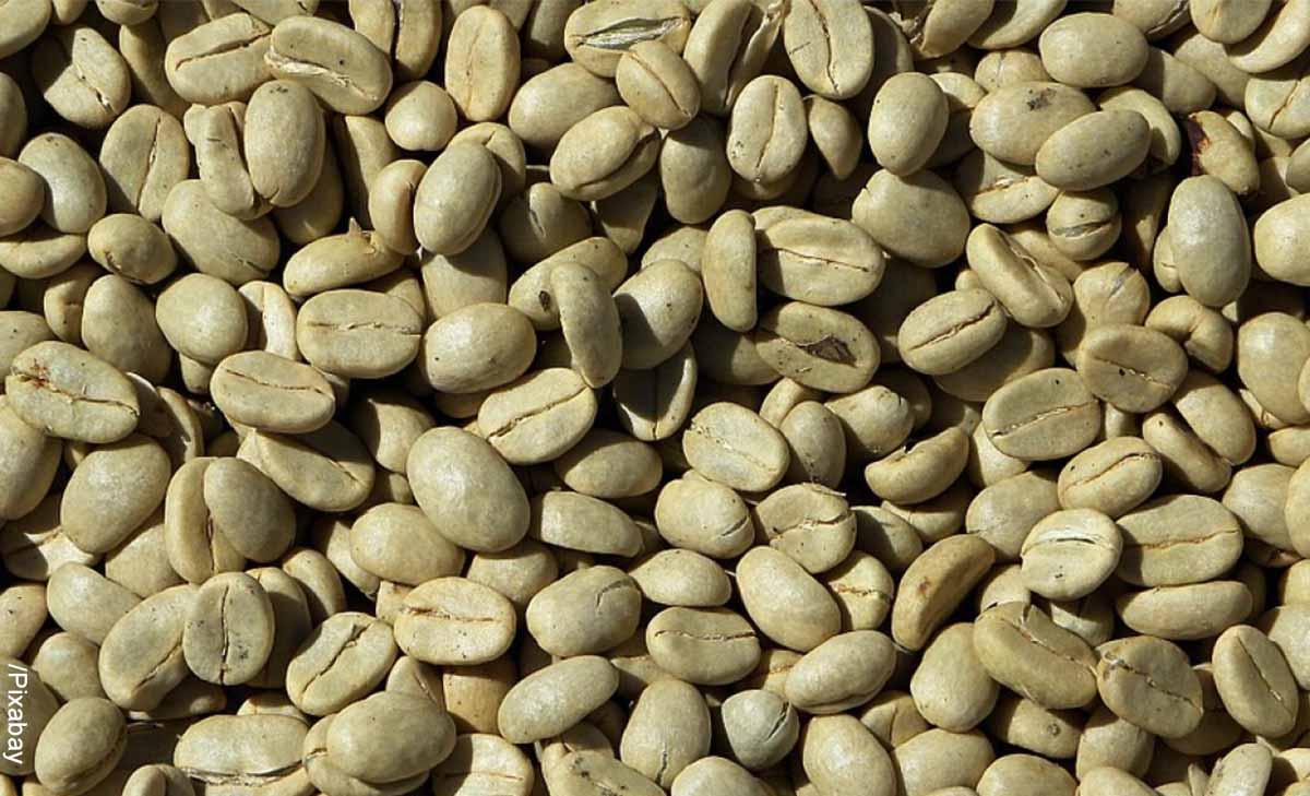 Foto de granos que indican el café verde para qué sirve