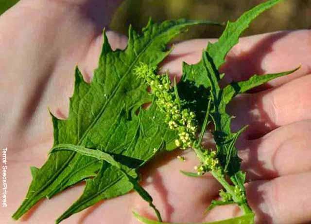 Foto de una mano sosteniendo las hojas de una planta
