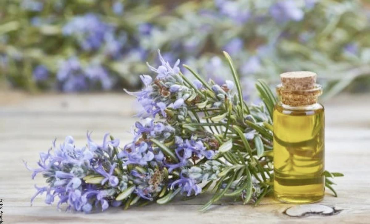 Para qué sirve el aceite de romero y sus beneficios