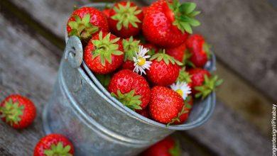 Foto de un balde con fresas que muestra para qué sirve la fresa