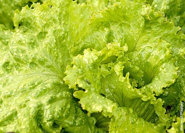 Foto de hojas de lechuga mojadas