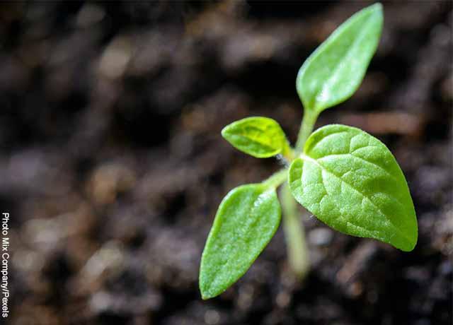 Foto de una planta creciendo en la tierra