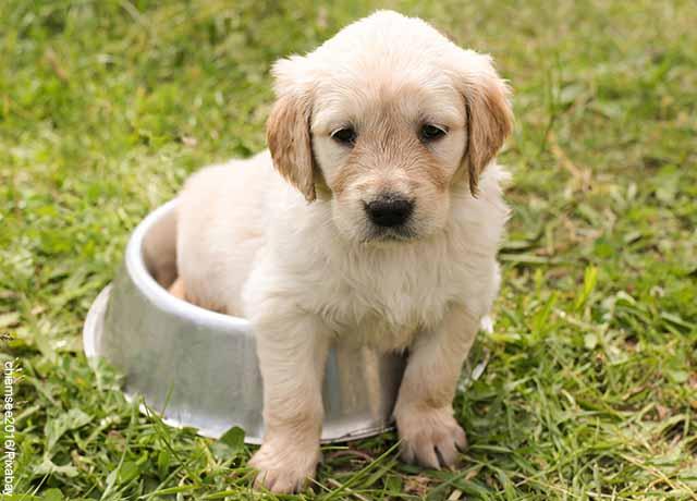 Perros nacen preparados para comunicarse con humanos, según estudio