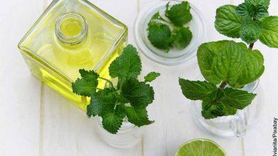 Foto de hojas de menta y un aceite que revela las plantas medicinales y para qué sirven