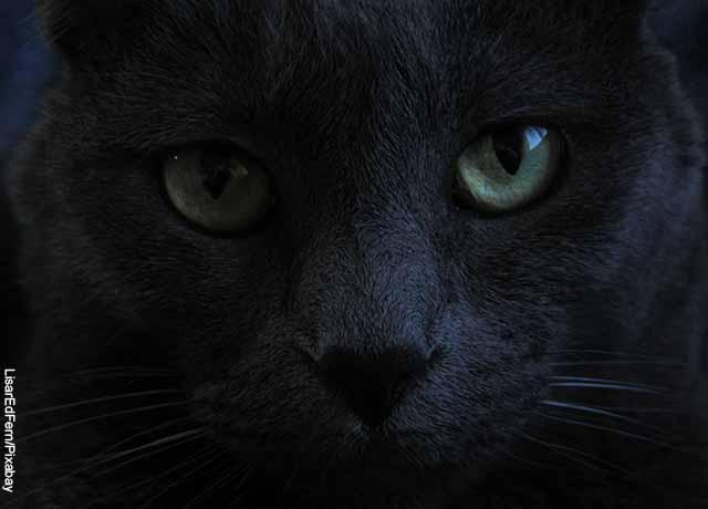 Foto de la cara de un gato negro que muestra lo que es soñar con brujería