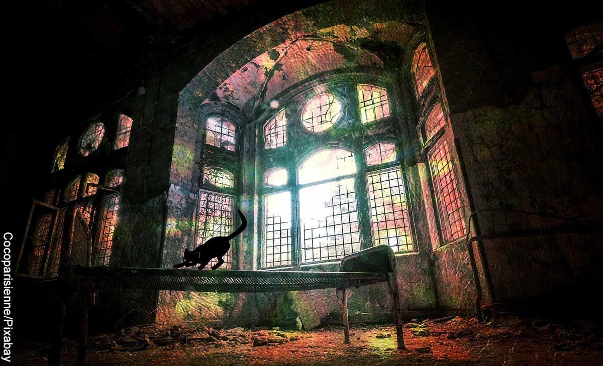 Foto de una casa abandonada con un gato negro que reveña que es soñar con brujería
