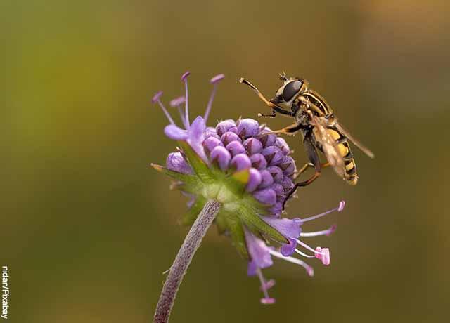 Foto de una abeja sobre una flor morada que muestra lo que es soñar con insectos