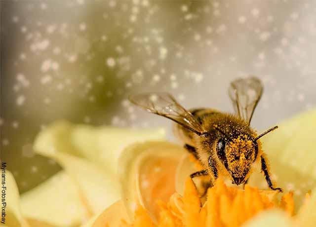 Foto de un abejorro sobre una planta amarilla