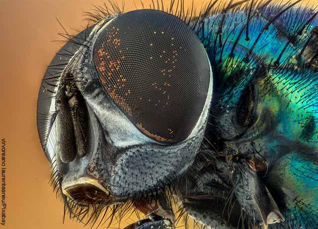 Foto de la cabeza de una mosca