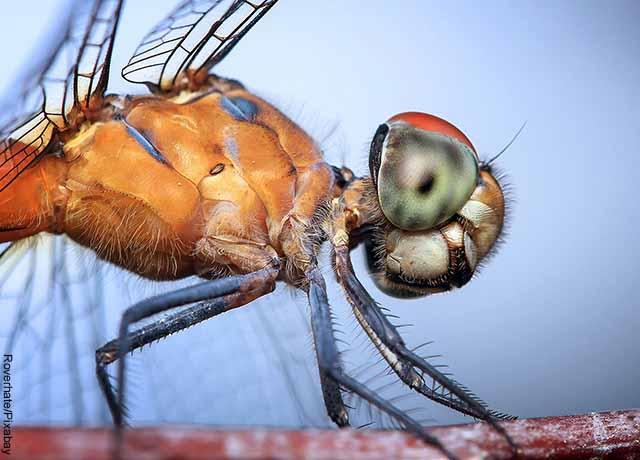 Foto de una mosca que revela lo que es soñar con insectos