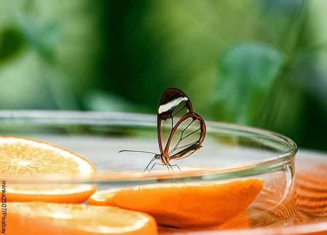 Foto de una mariposa transparente sobre un envase