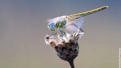 Foto de una libélula sobre una planta que revela lo que es soñar con insectos