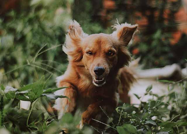 Foto de un perro corriendo en el pasto