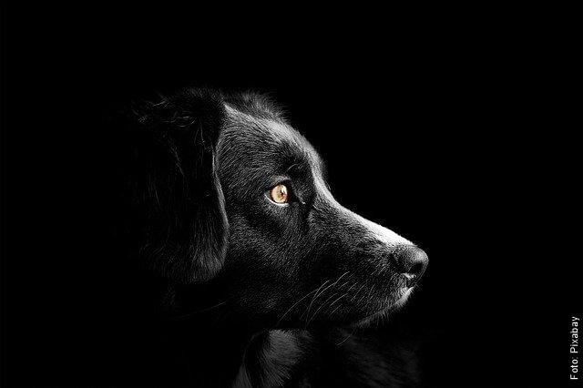 foto de perro negro