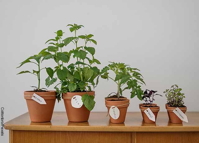 Foto de varias materas de cerámica con plantas sobre una mesa