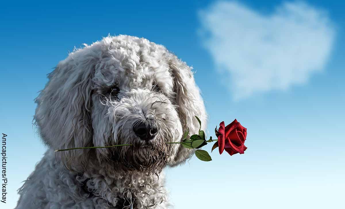 Foto de un perro con una rosa en su trompo que revela las canciones para pedir perdón