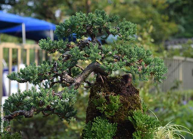 Foro de un pequeño árbol al aire libre