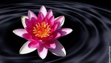 Foto de una flor rosada sobre el agua que revela la flor de loto y su significado