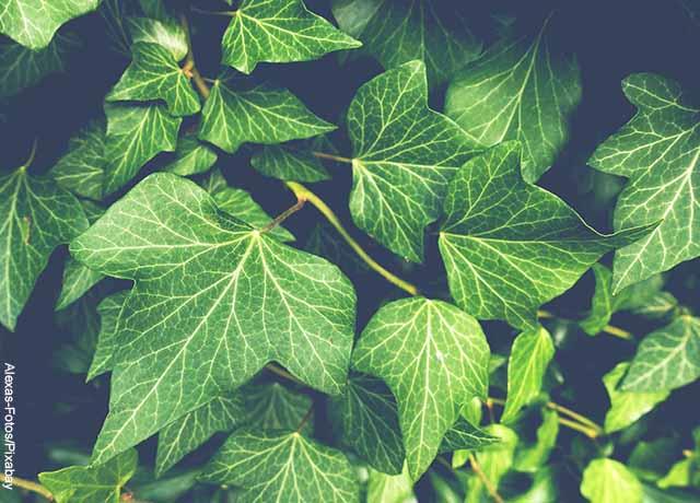 Foto de hojas de una planta que muestra para qué sirve el fósforo