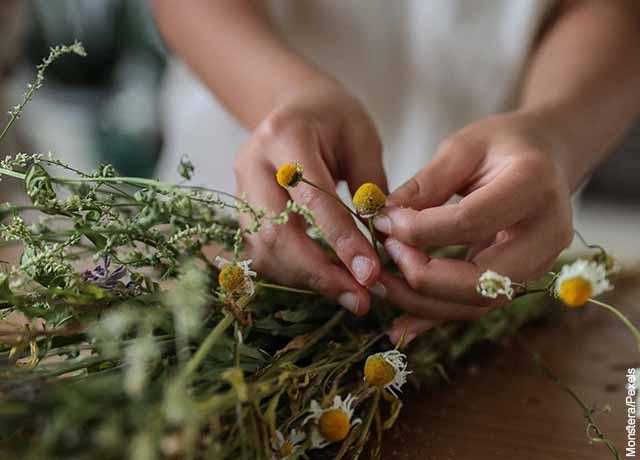 Foto de una mujer cogiendo una planta de manzanilla