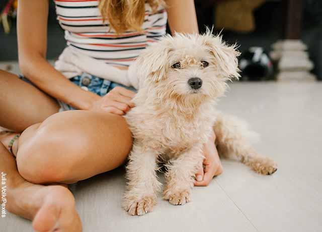 Foto de un perrito con su amo