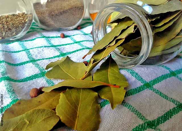 Foto de un recipiente con hojas de laurel verdes