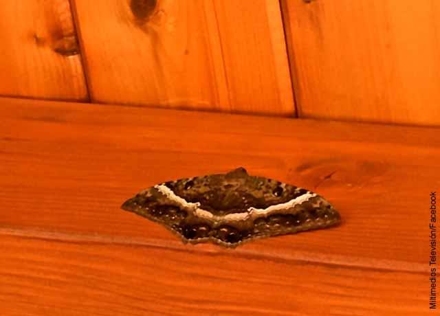 Foto de una mariposa café en una mesa