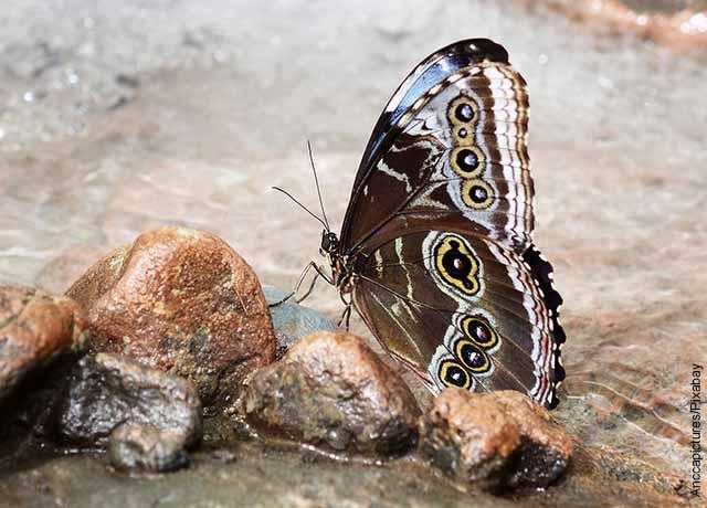 Foto de una mariposa en una piedra que muestra qué significa una mariposa negra en el cuarto