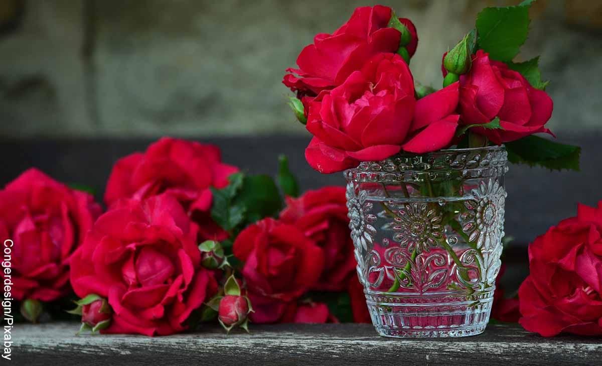 Foto de rosas rojas en un florero de vidrio que revelan lo que significan el color de las rosas