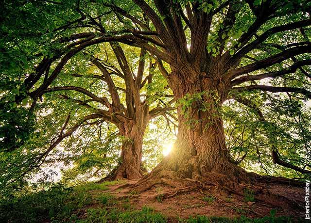 Foto de dos árboles grandes